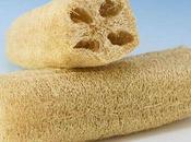 Luffa, planta esponja vegetal estropajo natural