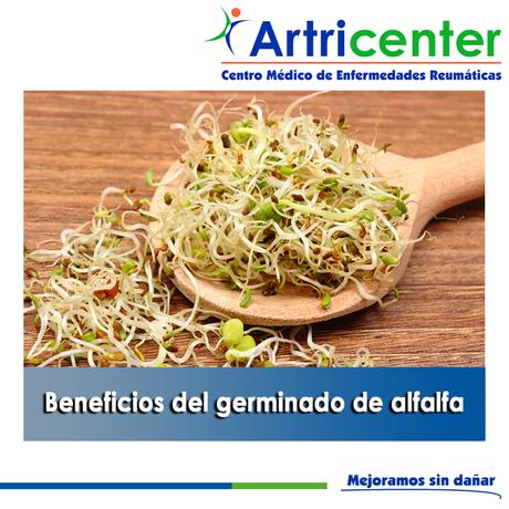 Artricenter: Beneficios del germinado de alfalfa