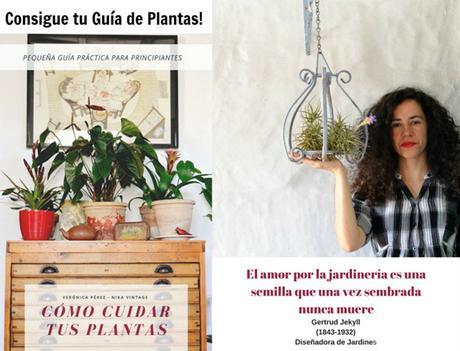 GUÍA DE PLANTAS - BLACK FRIDAY