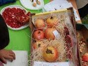"""Mercado otoño: lectoescritura """"folio blanco"""""""