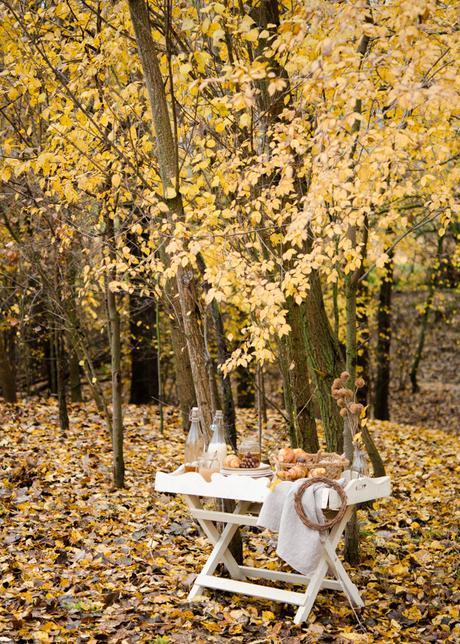 fotografía de otoño