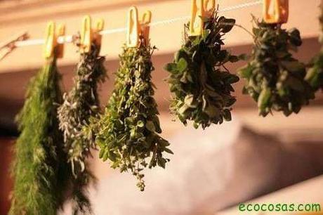 10 + 1 formas de preservar tus hierbas aromáticas y plantas medicinales