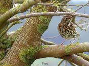 Aves comunes