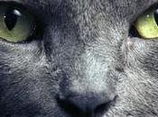 Gatos Protectores Hogar Contra Espíritus Negativos Fantasmas, además poseen propiedades curativas.
