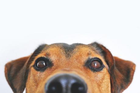 Motivación canina: leer con perros ayuda a niños a continuar la lectura