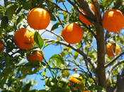 #Ocio: naranja llama color naranja… revés?