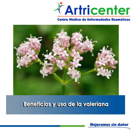 Artricenter: Beneficios y uso de la valeriana