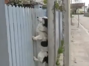 Otro perro ninja vuelve casa siempre