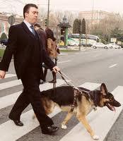 CARTA ABIERTA A LOS V.I.D. (VERY IMPORTANT DOGS). PARTE II.