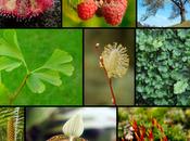 Clasificación plantas según tamaño