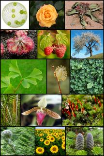 Clasificación de las Plantas según el Tamaño