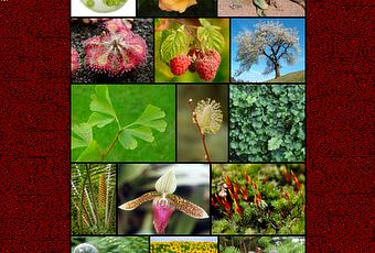 Clasificaci n de las plantas seg n el tama o paperblog for Clasificacion de las plantas ornamentales