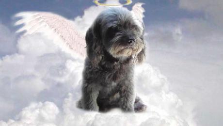 ¿Los animales cuando mueren van al cielo?