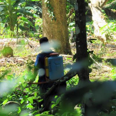 ONG cuestiona Ministro de ambiente por destrucción de refugio de vida silvestre Gandoca Manzanillo