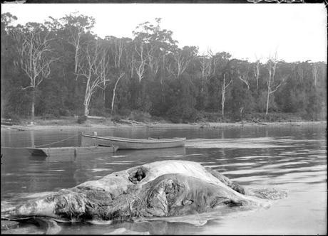 Cadáver de ballena como tratamiento para la artritis reumatoide