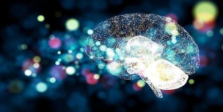 Fundamentos de neurociencia – curso online de la Universidad de Harvard