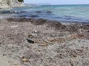 """Cuando """"suciedad"""" playas puede útil"""