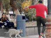 Pasean cachorro Tigre blanco jardín Matehuala