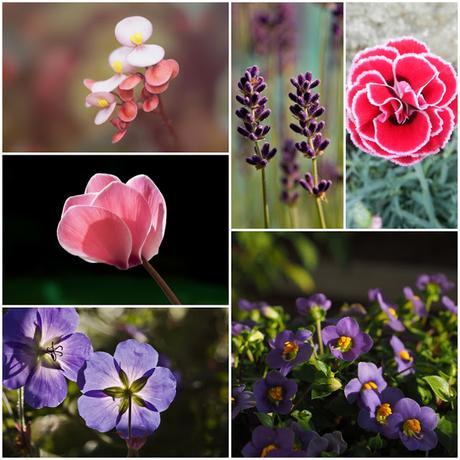 Plantas que dan flores todo el año