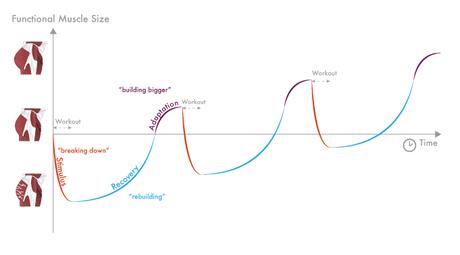 Resultado de imagen de curva sra
