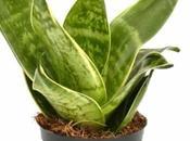 plantas interior resistentes necesitan poca