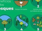 Árbol Comunitat Valenciana