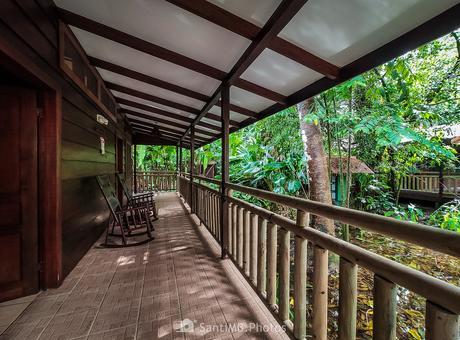 Alojados en la selva
