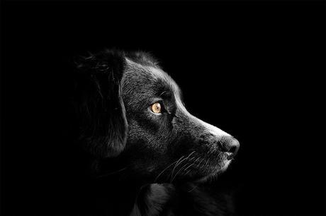 Perro flaco