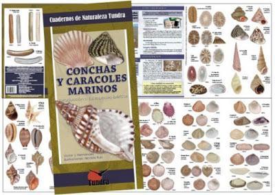 NOVEDAD EDITORIAL: Conchas y caracoles marinos