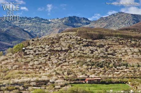 Cerezo en flor 2019. Valle del Jerte