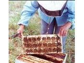 Almacenamiento abejas reinas banco