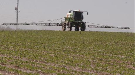 Insecticidas y sus efectos en el medio ambiente, más información aquí