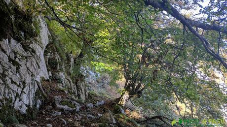 Zona boscosa y caliza bajo el Pico Formoso