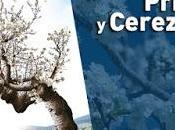 "Cartel oficial ""Primavera Cerezo Flor 2020"". Valle Jerte"