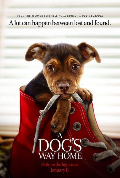 Movie Trailers - A Dog's Way Home - Trailer: A Dog's Way Home chronicles the heartwarming adventure of Bella, a dog who embarks… - View More