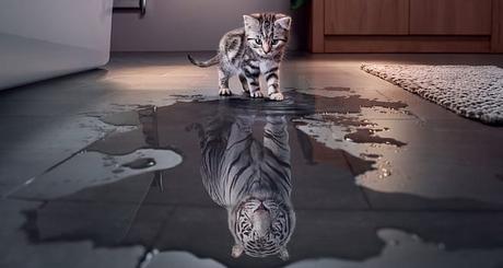 fortalecer la autoestima gato a tigre