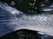 ¿Nos hace daño mercurio pescado?