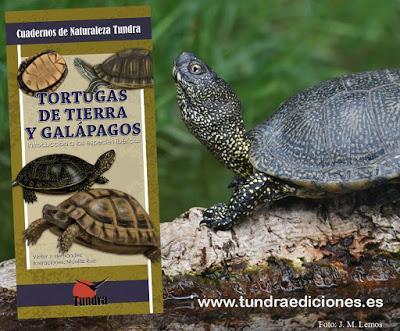 NOVEDAD: Tortugas de tierra y galápagos