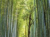 mágico lugar llamado bosque bambu japon