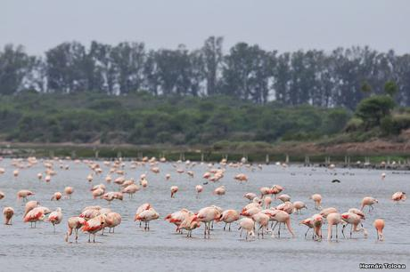 Laguna del Plata (noviembre 2019)