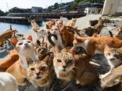 isla gatos.