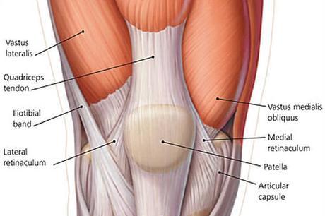 cuadriceps_ejercicios_para_piernas