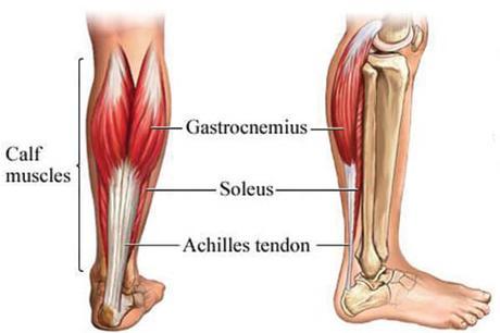 gastrocnemio ejercicios para piernas en casa