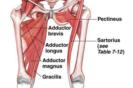 abductores_ejercicios_para_piernas