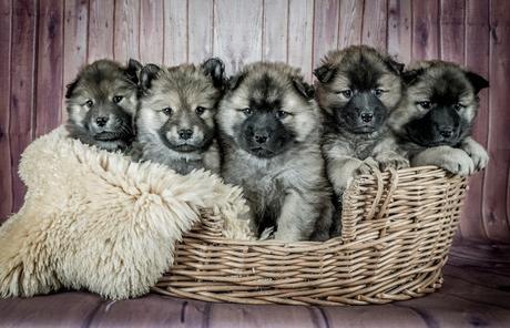 ¿Por qué los perros son tan diferentes?