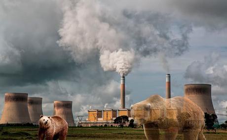 ¿Cómo se consigue una licencia ambiental?