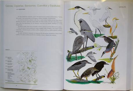 Manual Ilustrado de las Aves de la Patagonia