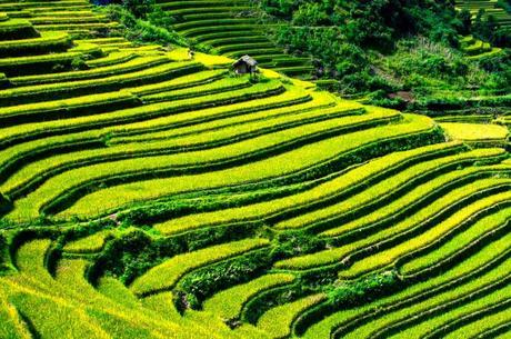 visado electronico vietnam
