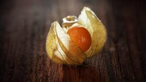 physalis fruta