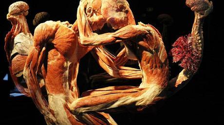 Conoce el cuerpo humano con Human Bodies